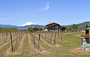 Tasting Photos - Mt Hood winery Oregon. by Gino Rigucci