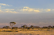 Marion McCristall - Mt. Kilimanjaro