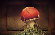 Soil Mixed Media - Mushroom by Heike Hultsch