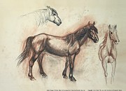Pottery Pastels - Mustang Mare Daisy by Maureen Love