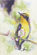 Flycatcher Art - Narcissus Flycatcher by Alexandra Spencer