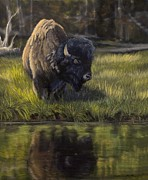 Bison Pastels - Native Reflections by Stephanie Funke- Sweeten
