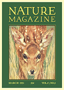 Fawn Framed Prints - Nature Magazine Framed Print by Gary Grayson