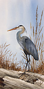 Great Blue Heron Paintings - Natures Gentle Beauty by James Williamson