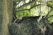 Laurie Perry - Nesting