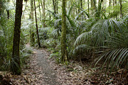 Jungle Prints - New Zealand forest Print by Les Cunliffe