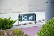 Perros Photos - No dog by Stefano Piccini