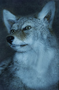 Northwoods Photos - Northwoods Wolf by Birgit Tyrrell