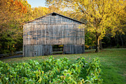 Natchez Trace Parkway Prints - Old Tobacco Barn Print by Brian Jannsen