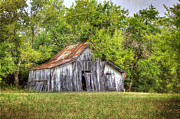 Lisa Moore - Old White Barn