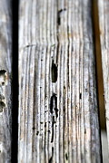 Concern Prints - Old Wood Texture Print by Henrik Lehnerer