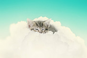 Kitten Prints Photo Posters - On Cloud Nine Poster by Amy Tyler