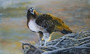 Red-tailed Hawk Paintings - On the Nest by Jan Neufelder