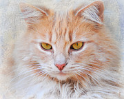 Long Haired Cat Posters - Orange Tabby Cat Poster by Jai Johnson
