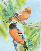 Oriole Drawings Metal Prints - Orioles Metal Print by Cristolin O