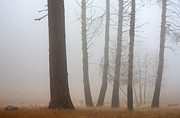 Fall Trees Prints - Out of the Fog Print by Mike  Dawson