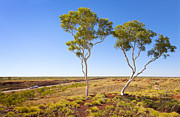 Western Australia Prints - Outback Australia Ghost Gums Print by Colin and Linda McKie