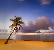 Ocean Images Prints - Palm Print by Scott Meyer
