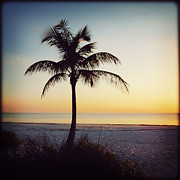 Florida Flowers Framed Prints - Palm Silhouette Sunset Framed Print by Chris Andruskiewicz