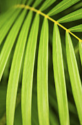 Crossing Photo Posters - Palm tree leaf Poster by Elena Elisseeva