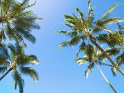 Featured Metal Prints - Palm Tree Sky Metal Print by Kicka Witte