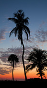 Mark Ross Posters - Palm Trees at Sunset Poster by Mark Ross