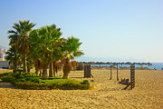Mediterranean Landscape Pyrography Prints - Palm trees on a beach in Fuengirola Print by Dragomir Nikolov