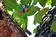 Quaker Parrot Photos - Parakeet in the park by Ira Runyan