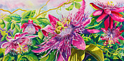 Sunlight On Petals Prints - Passionflower Party Print by Janis Grau
