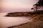 Freycinet Posters - Pastel Rocks at Sunset Poster by Tim Hester