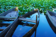 Water Lily Photos - Pateira Boats by Carlos Caetano