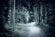 Gloomy Metal Prints - Path in dark forest Metal Print by Elena Elisseeva