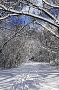 Winter Trees Photos - Path in winter forest by Elena Elisseeva