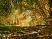 Autumn Photographs Mixed Media - Pathway through Autumn by Photography Moments - Sandi