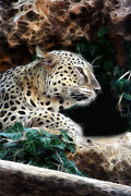 Michael Braham - Peaceful Leopard
