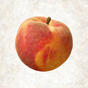 Ingredient Painting Framed Prints - Peach Framed Print by Danny Smythe