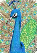 Carol Hamby - Peacock