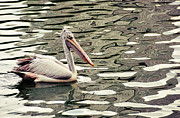 Jenny Rainbow - Pelican with Abstract Water Reflections