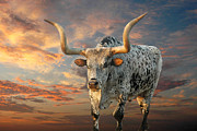 Texas Longhorn Framed Prints - Pepper Framed Print by Robert Anschutz