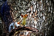 Tara Potts - Perching Squirrel