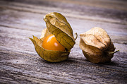 Food And Beverage Photos - Physalis  by Jane Rix