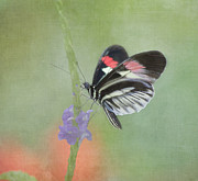 Tender Framed Prints - Piano Key Butterfly Framed Print by Kim Hojnacki