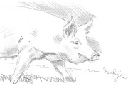 Pig Art - Pig Drawing by Mike Jory