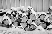 Conditions Posters - pile of logs covered in snow in Forget Saskatchewan Poster by Joe Fox