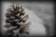 Kelly Prints - Pine Cone With a Hint of Color Print by Kelly Hazel