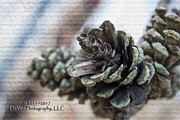Pine Cones Originals - Pine Cones by Stephani JeauxDeVine