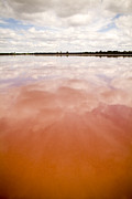 Pink Lake Print by Tim Hester