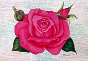Plant Greeting Cards Prints - Pink rose Print by Zulfiya Stromberg