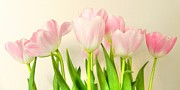 Tulips Art - Pink Tulips by Sharon Lisa Clarke