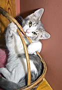 Susan Leggett Photo Metal Prints - Playful Kitten Metal Print by Susan Leggett